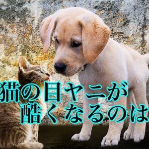 犬猫の目ヤニが酷くなるのは?
