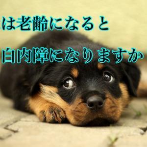 犬は老齢になると白内障になりますか?
