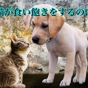 犬猫が食い飽きをするのは?