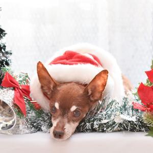 クリスマス&年賀状撮影会