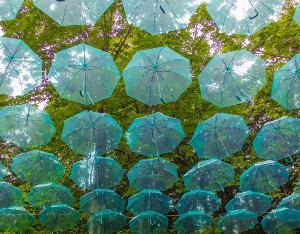 梅雨と桜と