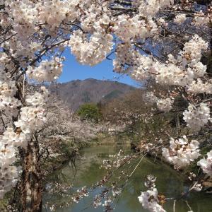 上田城址公園の千本桜