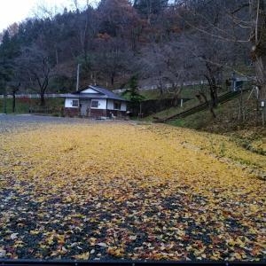 本日は黄色です