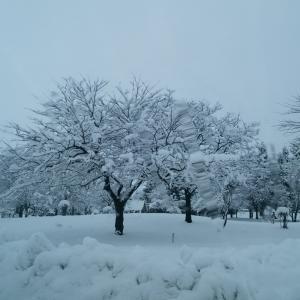 雪が欲しいデスね