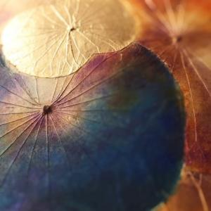★今週の色7/6~「ロイヤルブルー」「見えないものを見る」