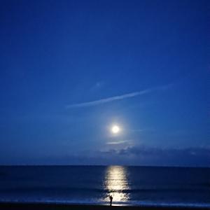 海で日向ぼっこ