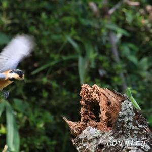 小鳥とカマキリ