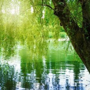 川の柳も…