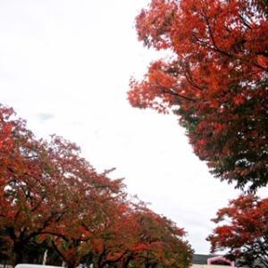 松本は紅葉し始めたね❗️✨松本サークルデー