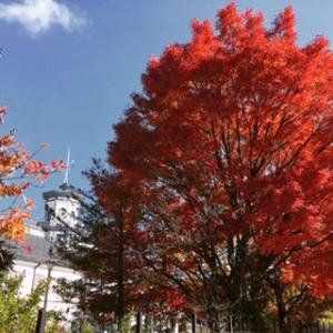 旧開智学校の紅葉が見頃❗️