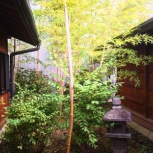 瑞祥の竹林❗️✨松本サークルデー