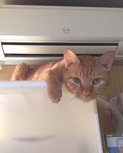 10月19日(土)・20日(日)保護猫カフェ開催します。