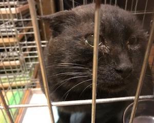 ジャンボ黒猫保護されました。