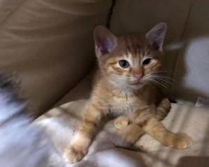 橙・麦・柚子お試しオファーを頂き、花梨キャンセルになりました。