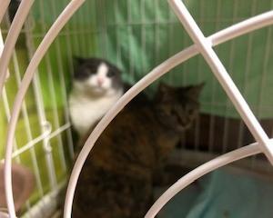 保護猫2匹、里親さんの元へ。