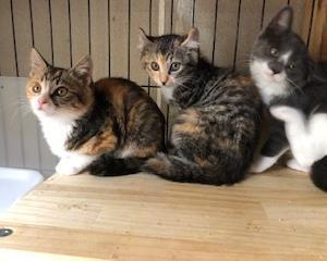 子猫3匹元気です。