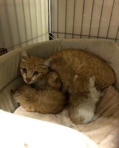 昨日ママ猫と子猫4匹保護しました。