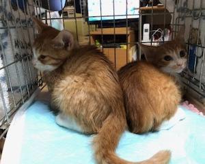 マリの子猫、不妊手術完了しました。
