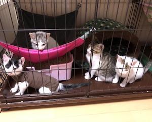 4匹不妊手術+飛び込みオス猫去勢手術でした。