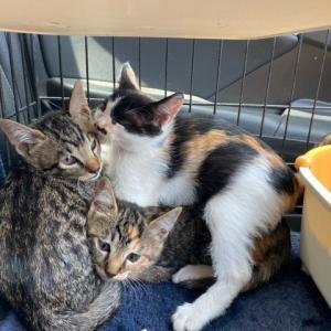 3匹の子猫の里親募集です。