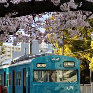 2020.3.29(Sun)の一枚 ~今年も並んだ、和田岬桜と「R1」~