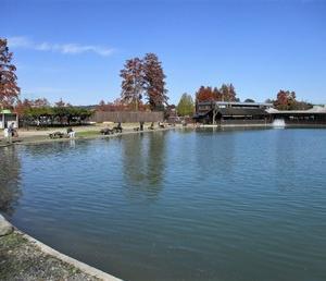 秋川湖(今年31回目)に行って来ました