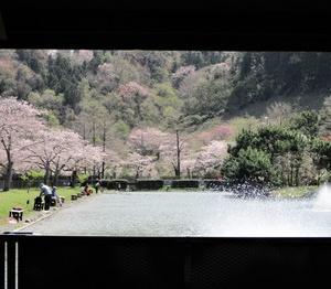 秋川湖(今年24回目)に行ってきました