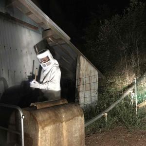 ハチ退治!危険と隣り合わせのみかん作り