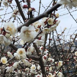 春の出来事