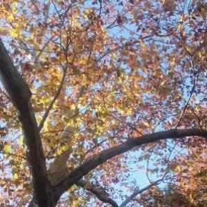 秋も深まった