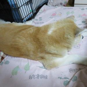 シニア犬に優しい高反発マットレス♡