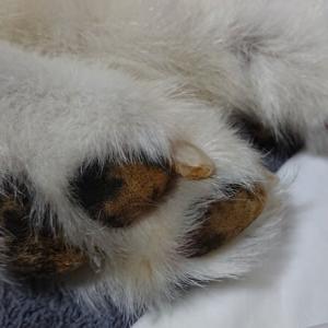 足の爪切り、と、真虎病院