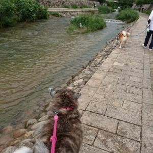 川と海お散歩~♪
