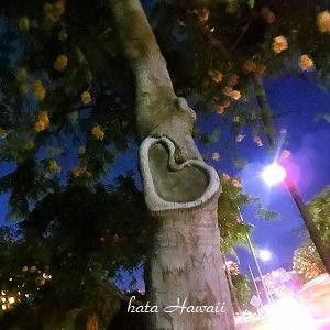 Hawaii☆夜のハートの木♡