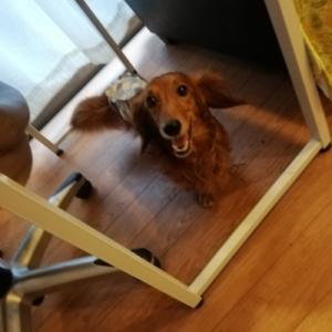 ロクジロー元同居犬 ロッキー君とのひととき