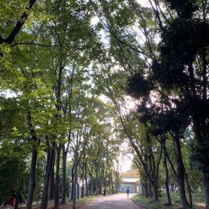秋の公園散策でイグアナ⁈ @緑地公園