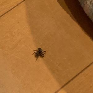 【閲覧注意】クモ