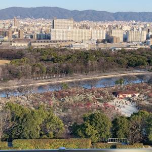 【見頃】多種多様な梅が咲く大阪城梅林