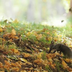秋の生き物たち