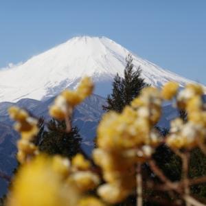 ミツマタ越しの富士山を見にミツバ岳へ。