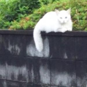 窓猫と出会いねこ