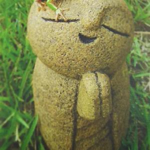 樹木葬の話
