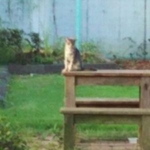 朝歩きで出会うネコ