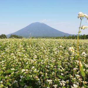 北海道 羊蹄山と蕎麦畑