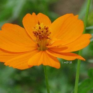夏の花、いろいろ