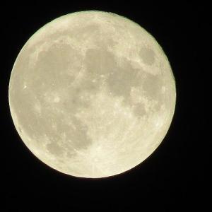 嬉しい中秋の名月