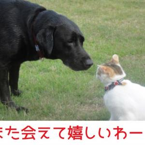 レーコメモ:「また会(あ)えて嬉(うれ)しいわー!」