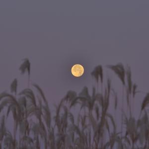 月と ねざめ草