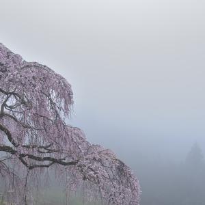 幽玄  栃原の春 @ 2020桜-9