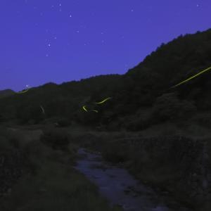 蛍 蠍と戯れる @ 明日香にて